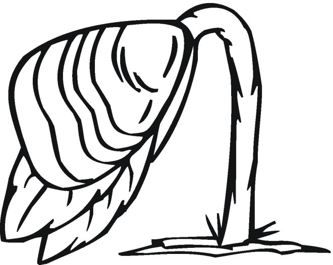 free coloring pages of plant growth