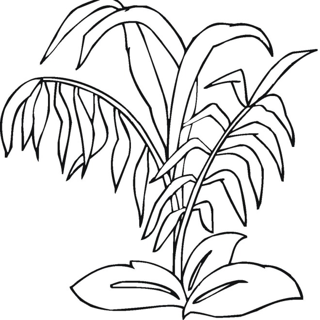 ocean plants coloring pages free - photo#11