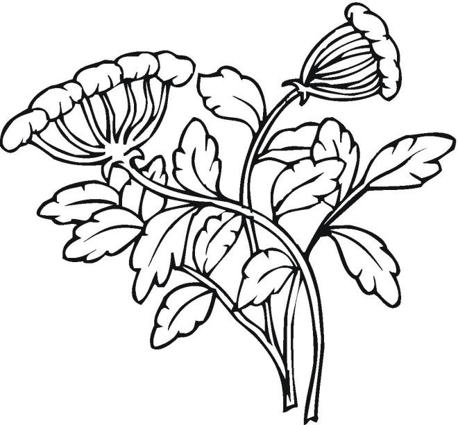 coloring book pages cotton plants - photo#22