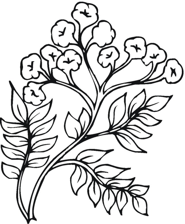 free plant coloring pages - photo#10
