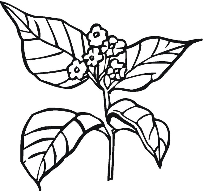 coloring pages seeds and plants - photo #33
