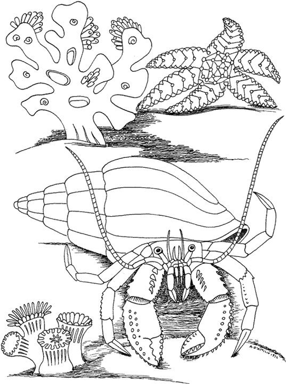 Free Seascape Coloring Pages Sketch Coloring Page